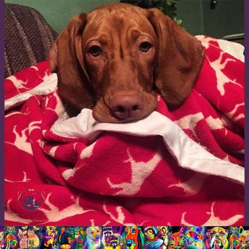 Tall Tails blankets for you and your dog.. available
