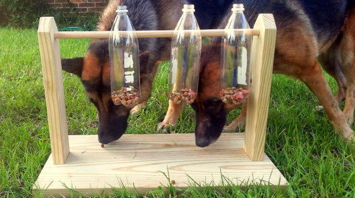 10 Ideas De Juegos Para Perros Perros Ropa Para Perros Tejida Mascotas