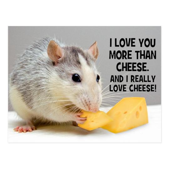 I Love You More Than Cheese Pet Rat Postcard