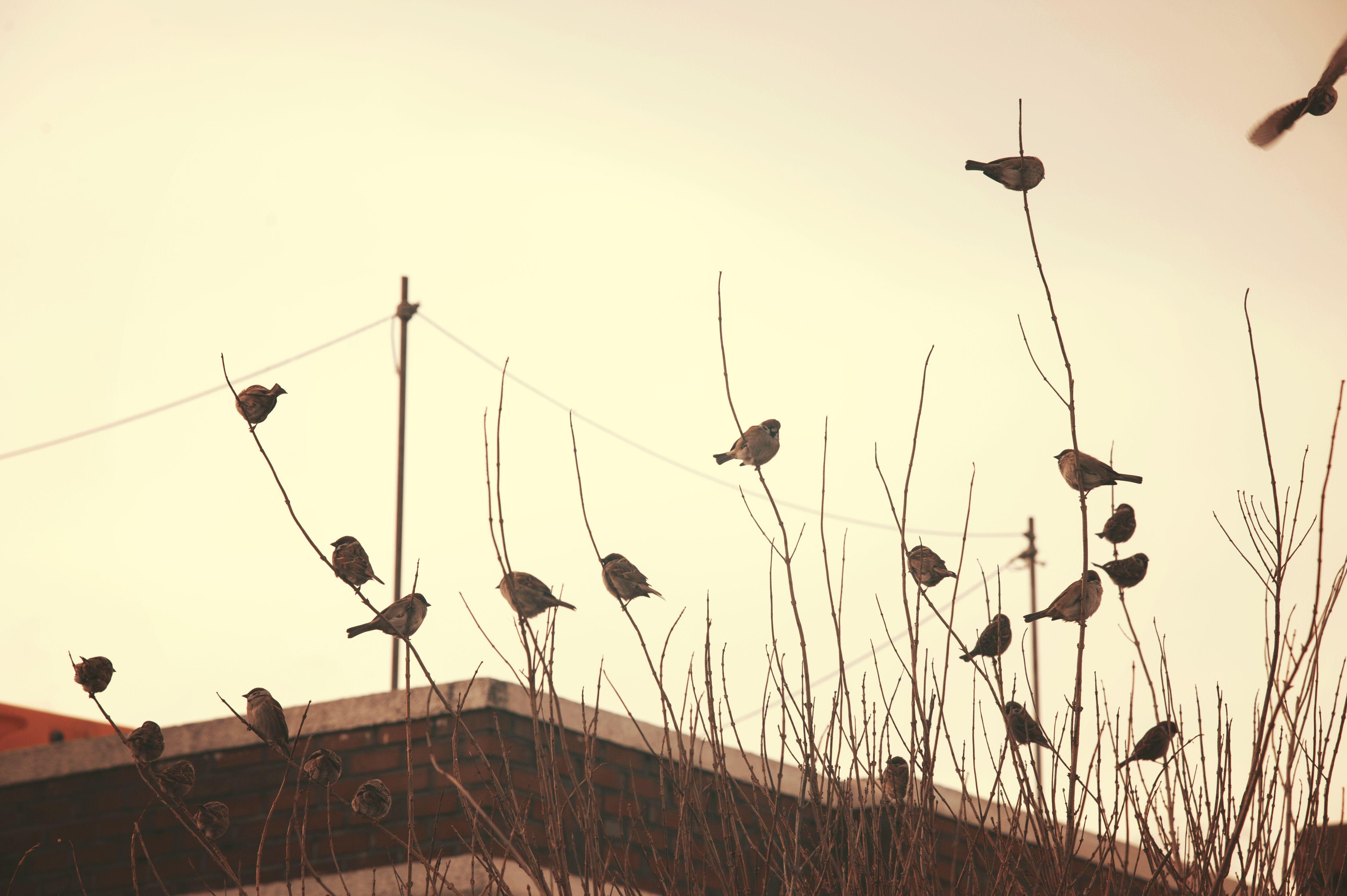 속초, Sokcho _ birds