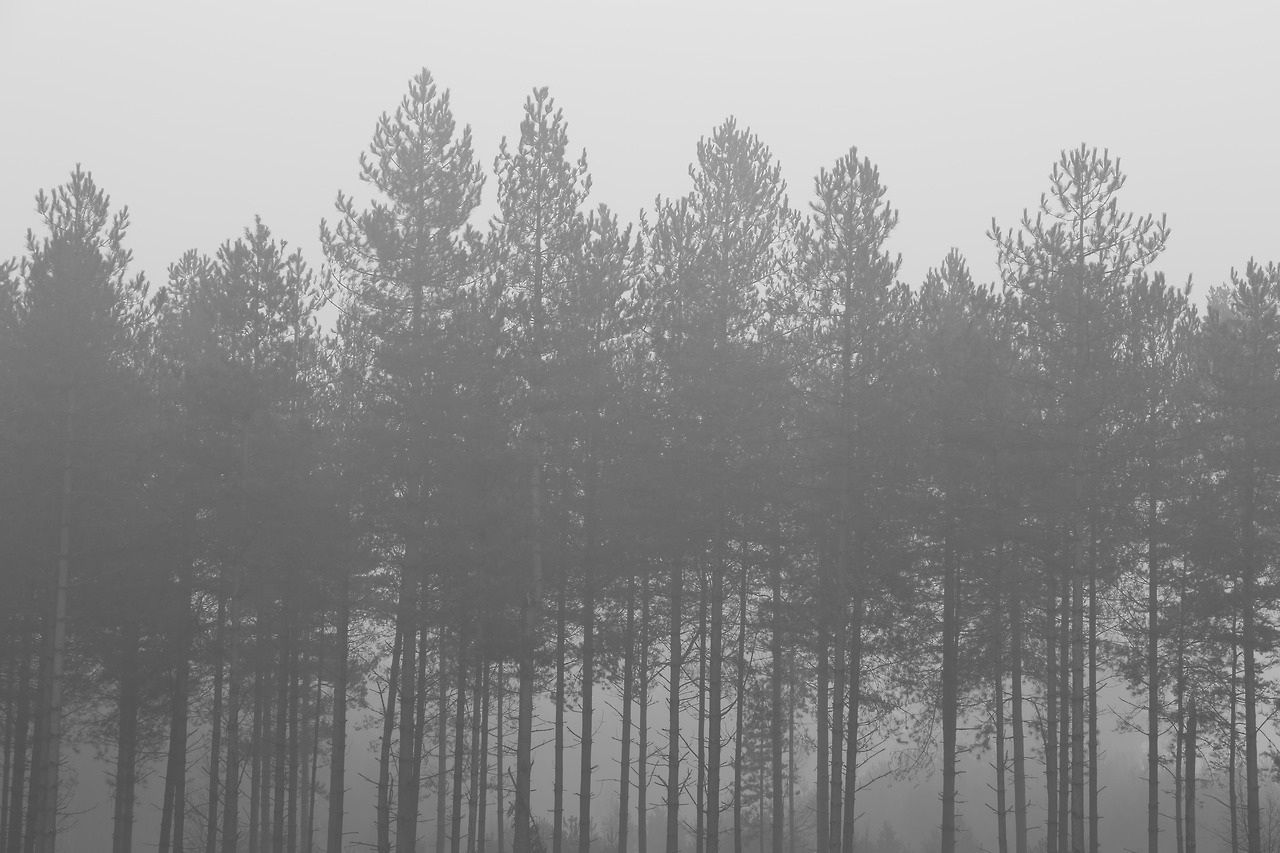 Foggy forest background tumblr awesome black and white cloudpix