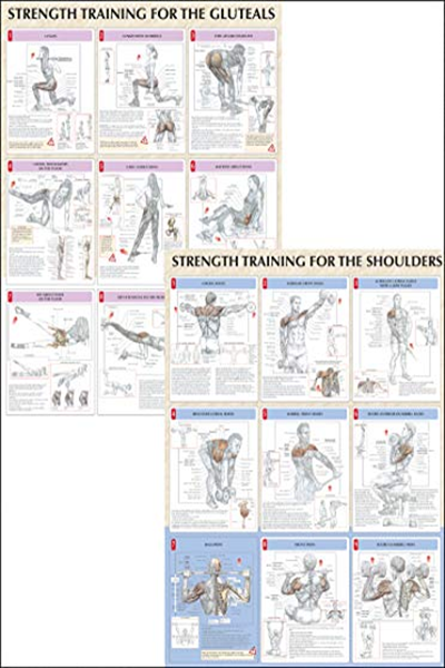 (2005) Strength Training Anatomy Poster Series by Frederic