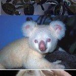 Just Some Albino Animals,  #Albino #albinoanimallion #animals #albinoanimals