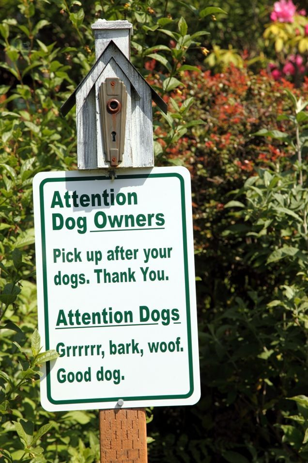Tips for a Safe and Fun Visit to the Dog Park Dog Pet