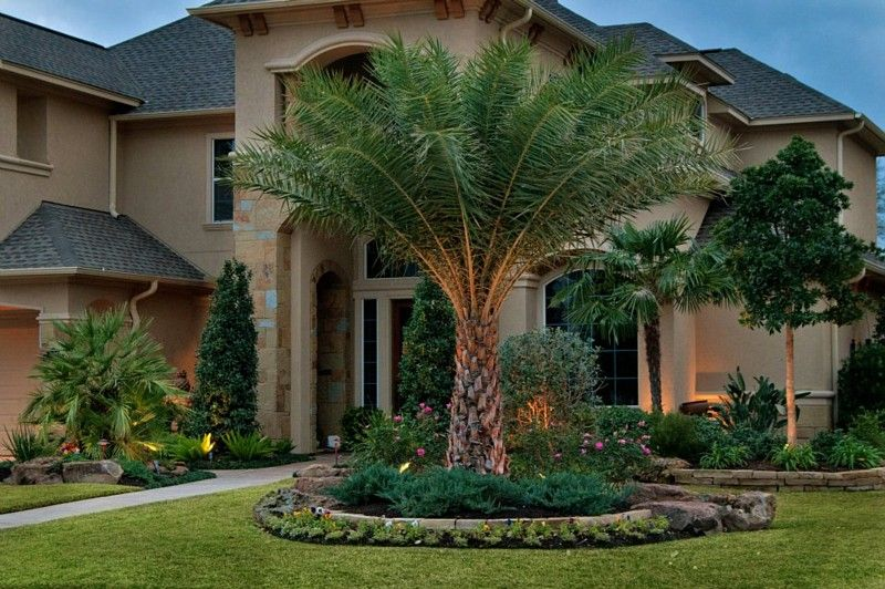 Custom Pools | Home landscaping, Backyard trees ... on Palm Tree Backyard Ideas id=61708