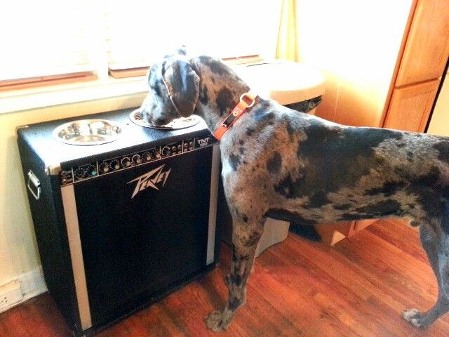 Great Dane Elevated Food Bowls Great Dane Doggy