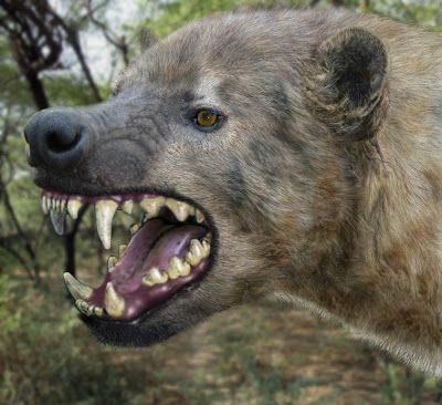 Well okay, I know that lately I talk a lot of hyenas, if the giant hyena or brevirostris , if Chasmaporthetes  including I talk about th...