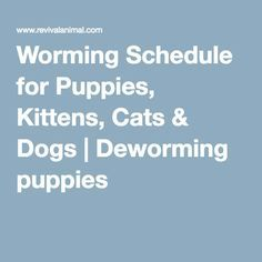 Worming Schedule For Puppies Kittens Cats Dogs Deworming