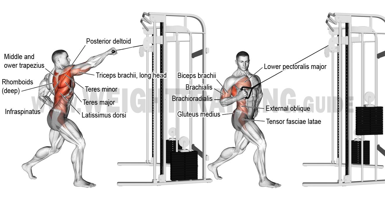 pingl par cyril sur anatomie musculation dos pinterest musculation poids de musculation. Black Bedroom Furniture Sets. Home Design Ideas