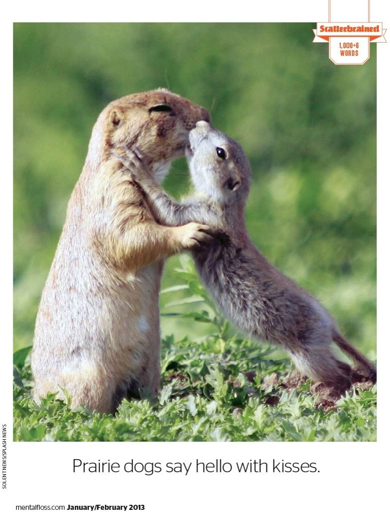 Prairie dogs greet each other with a kiss found this in mental prairie dogs greet each other with a kiss found this in mental floss m4hsunfo
