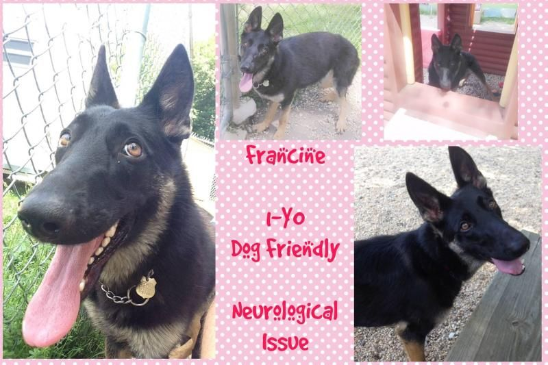 Adopt Francine On Dog Friends German Shepherd Dogs Dogs Puppies