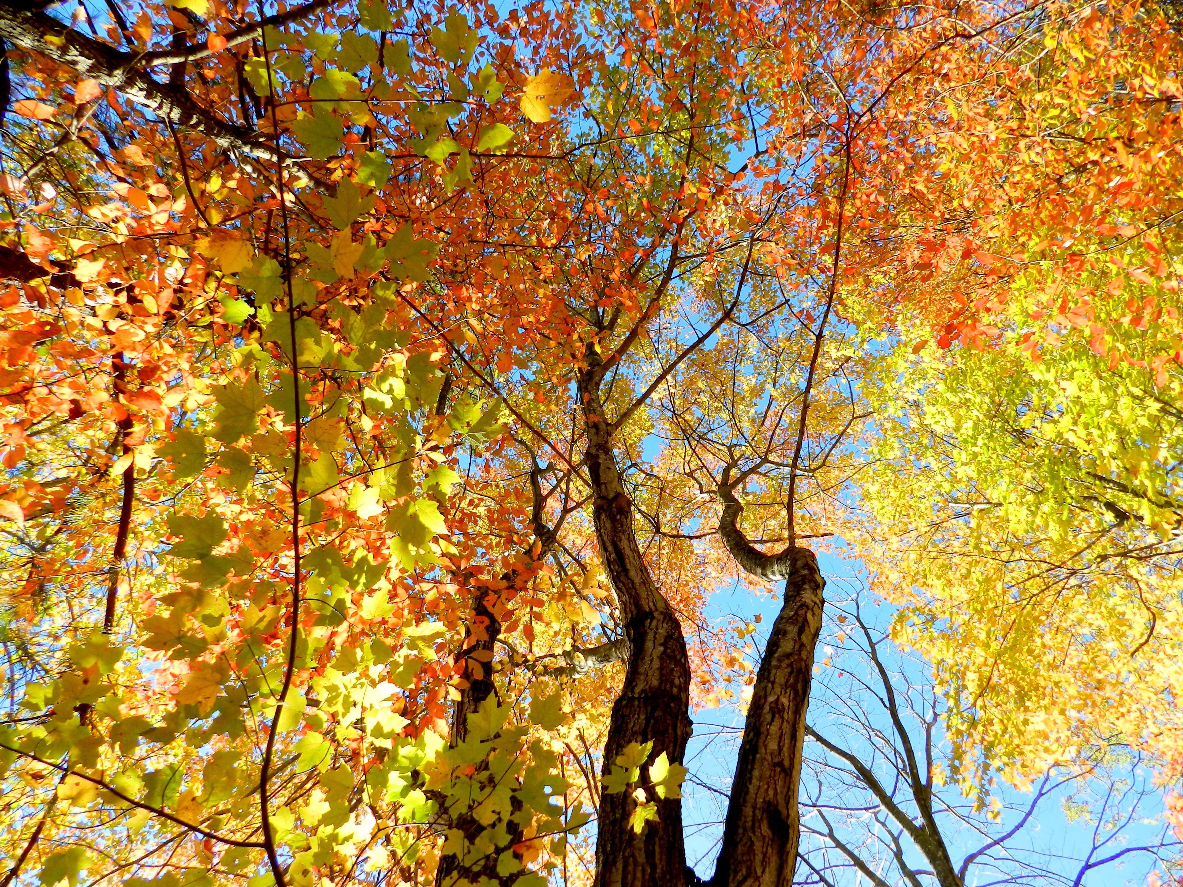 Fall Trees - Bluebird Farm