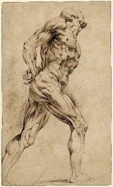 peter paul rubens anatomical drawings google search artist in