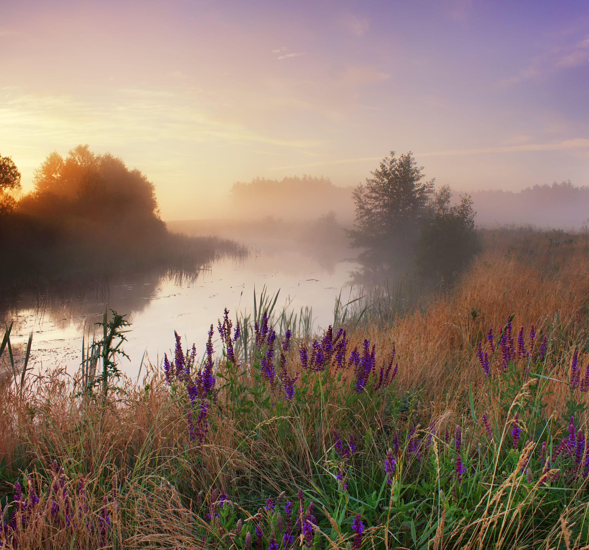 картинки утренний летний пейзаж ряд особенностей, которые