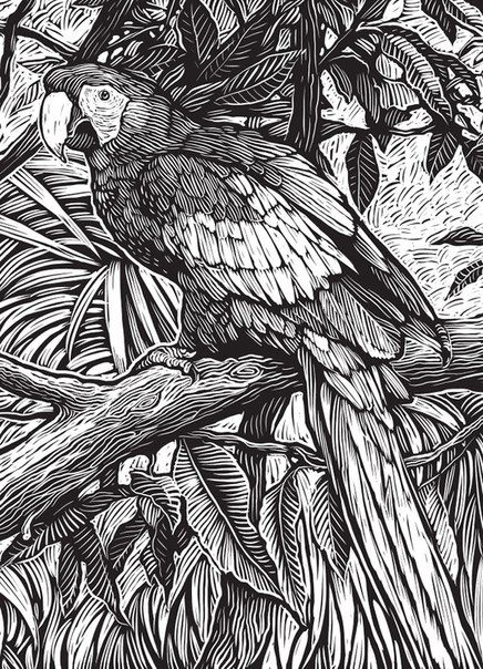 Природа. Попугай. Графика. | Рисунки для раскрашивания ...