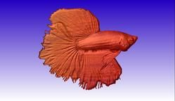 Beta Fish Vector Relief Model and 3d Clipart
