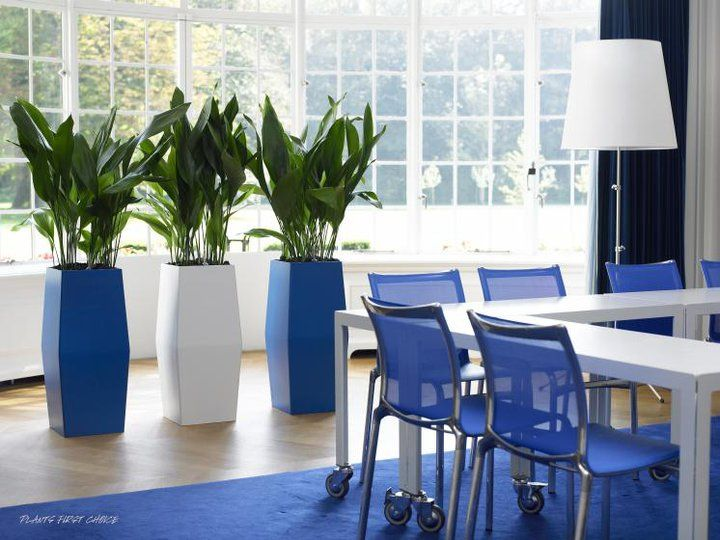 Indoor Office Plant Display With A Range Of Coloured Pots For More Information