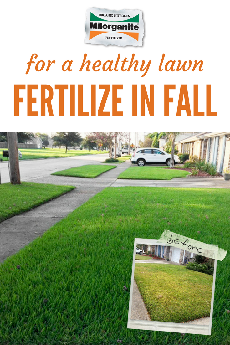 Warm Season Gres Put Down Your Next Lication Of Milorganite Fertilizer In Early October For Best Results Mix While Overseeding 4 Parts