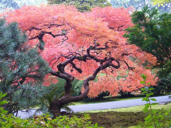 Photo of Japanese Garden in Portland, Oregon  Aside from being one of Portland's most pop…