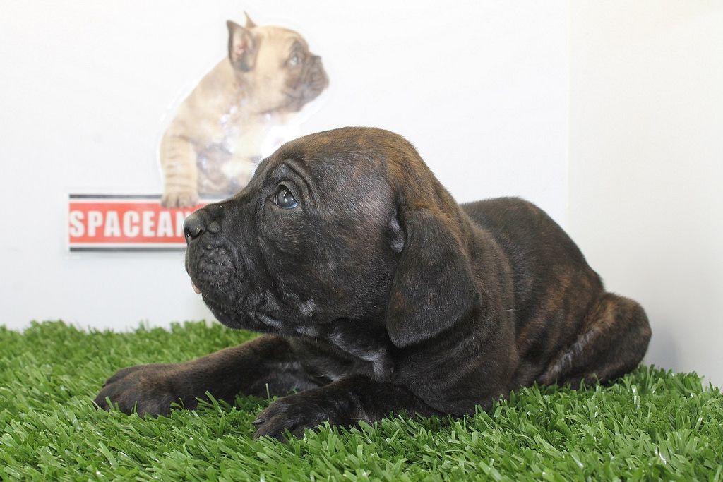 Dogloo Dog Houses For Large Dogs Best Dog Breeds Large Dog House