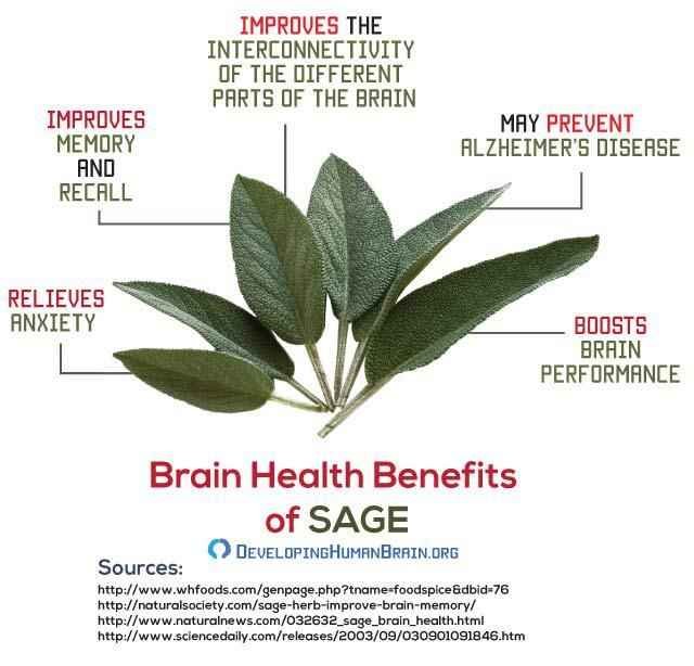 Brain food sage health and fitness pinterest brain food 15 best delicious and healthy brain food recipes forumfinder Image collections