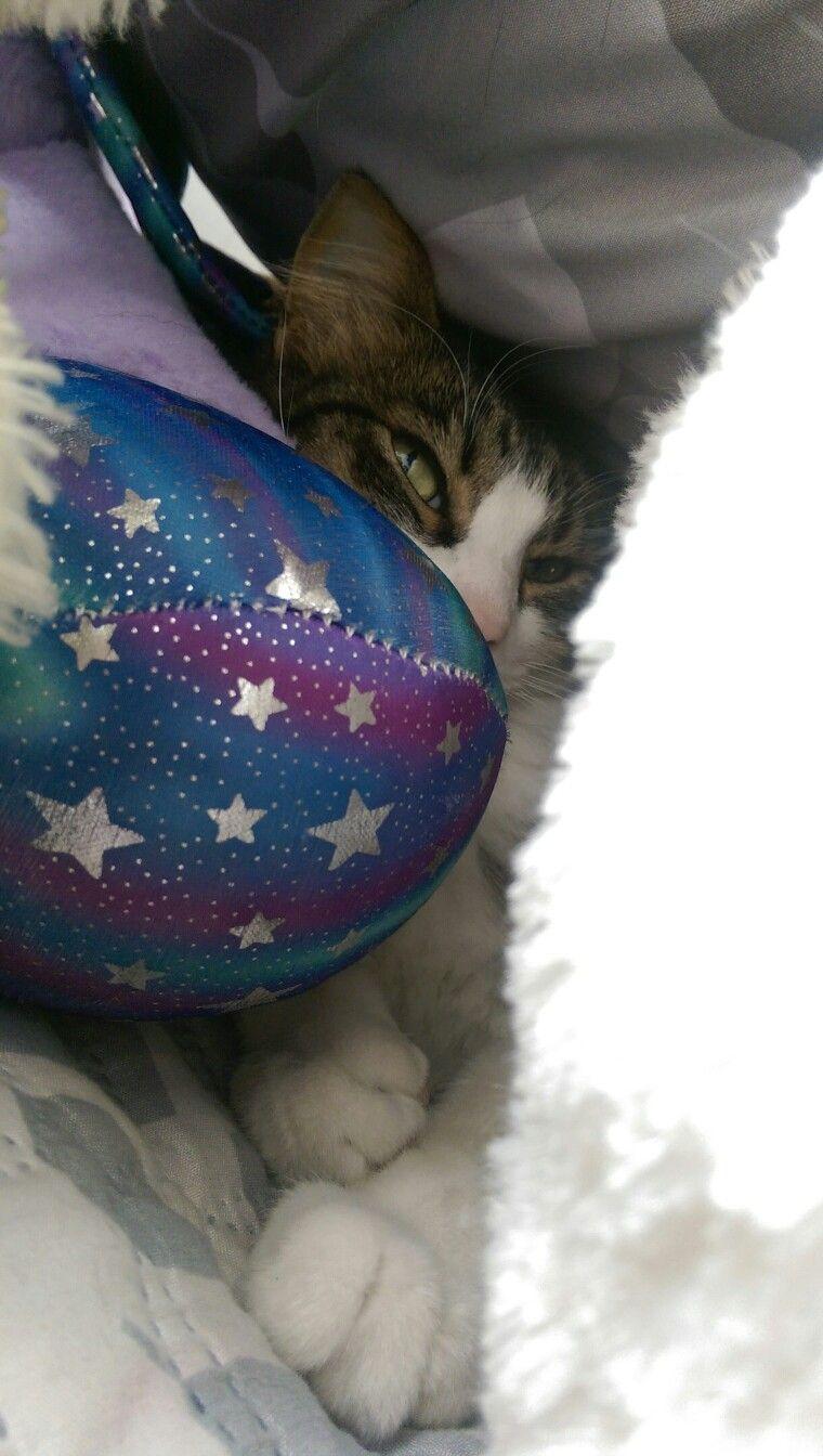 Encubierto Gatos, Peludo, Esconderse