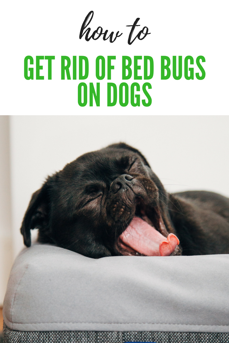 If You Are Concerned About Bed Bugs Affecting The Health Of Your Dog