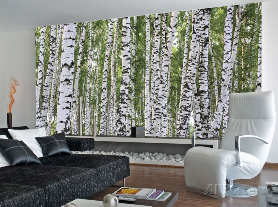 Forest of Birch Trees Wallpaper Mural Tree wall murals