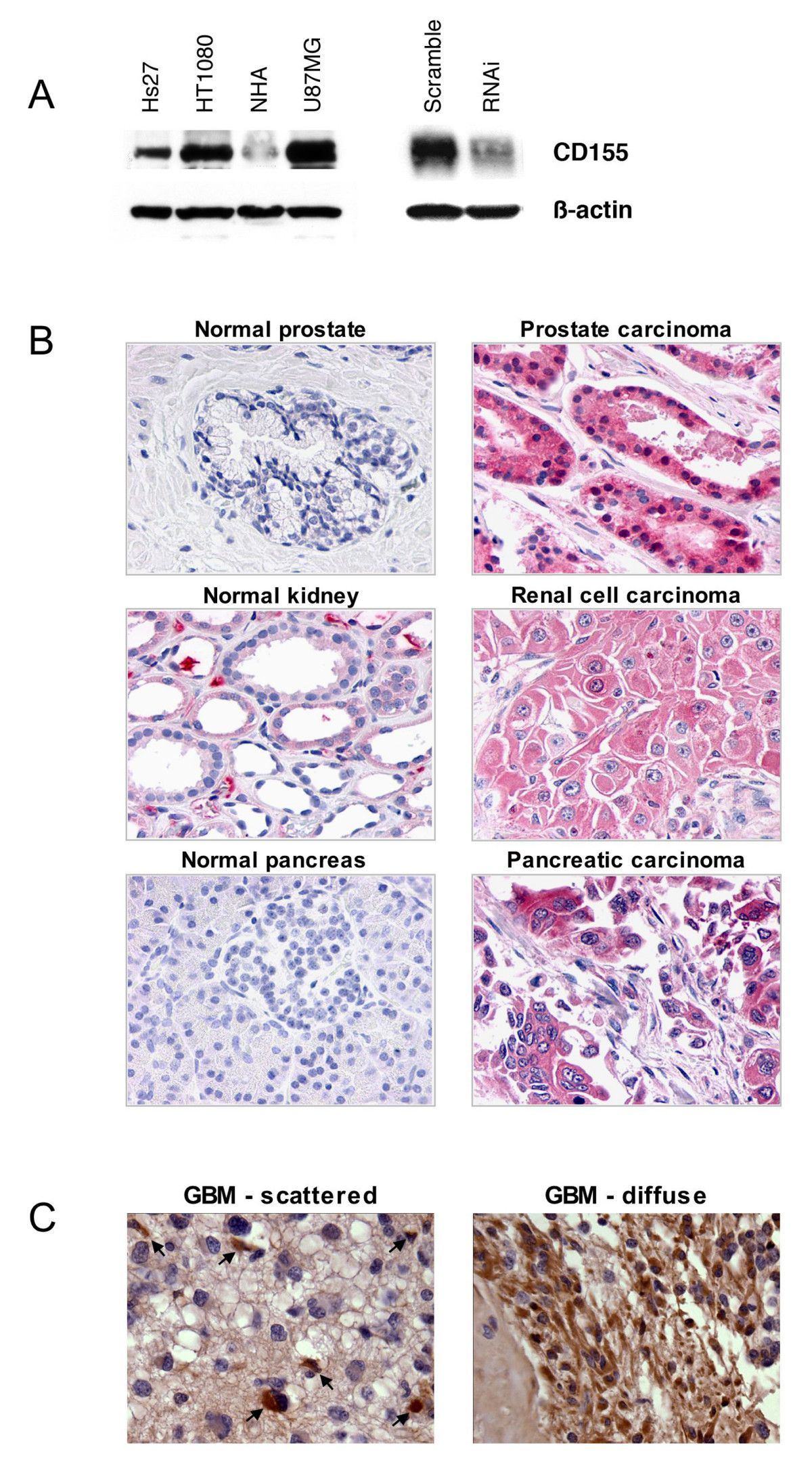 www biomedcentral com - Figure | Human Biology & Anatomy