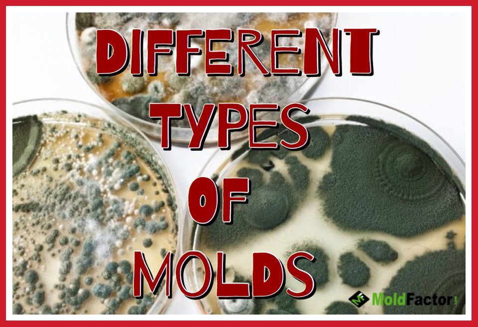 Different Types Of Molds You Can Find In Your Home Types Of