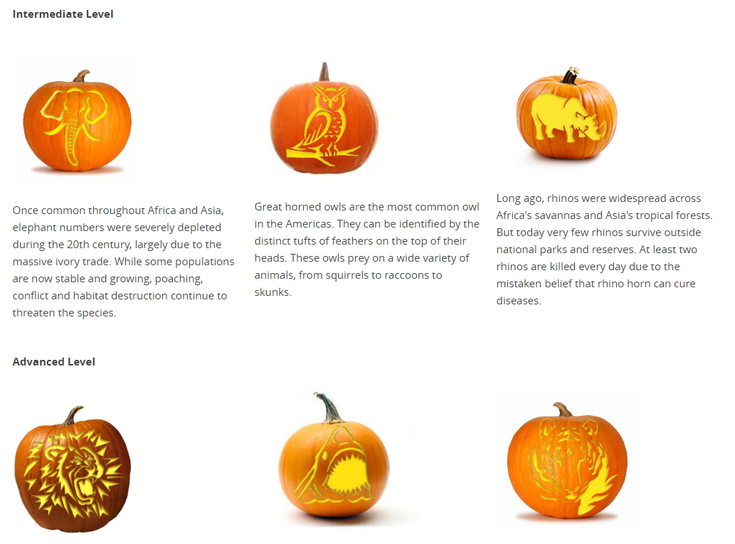 Free Pumpkin Carving Patterns And Templates For Halloween Pumpkin Carving Patterns Free Pumpkin Carving Patterns Pumpkin Carving