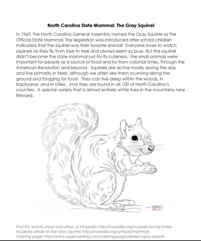 Ncpedia North Carolina State Mammal Activity Page Http Ncpedia