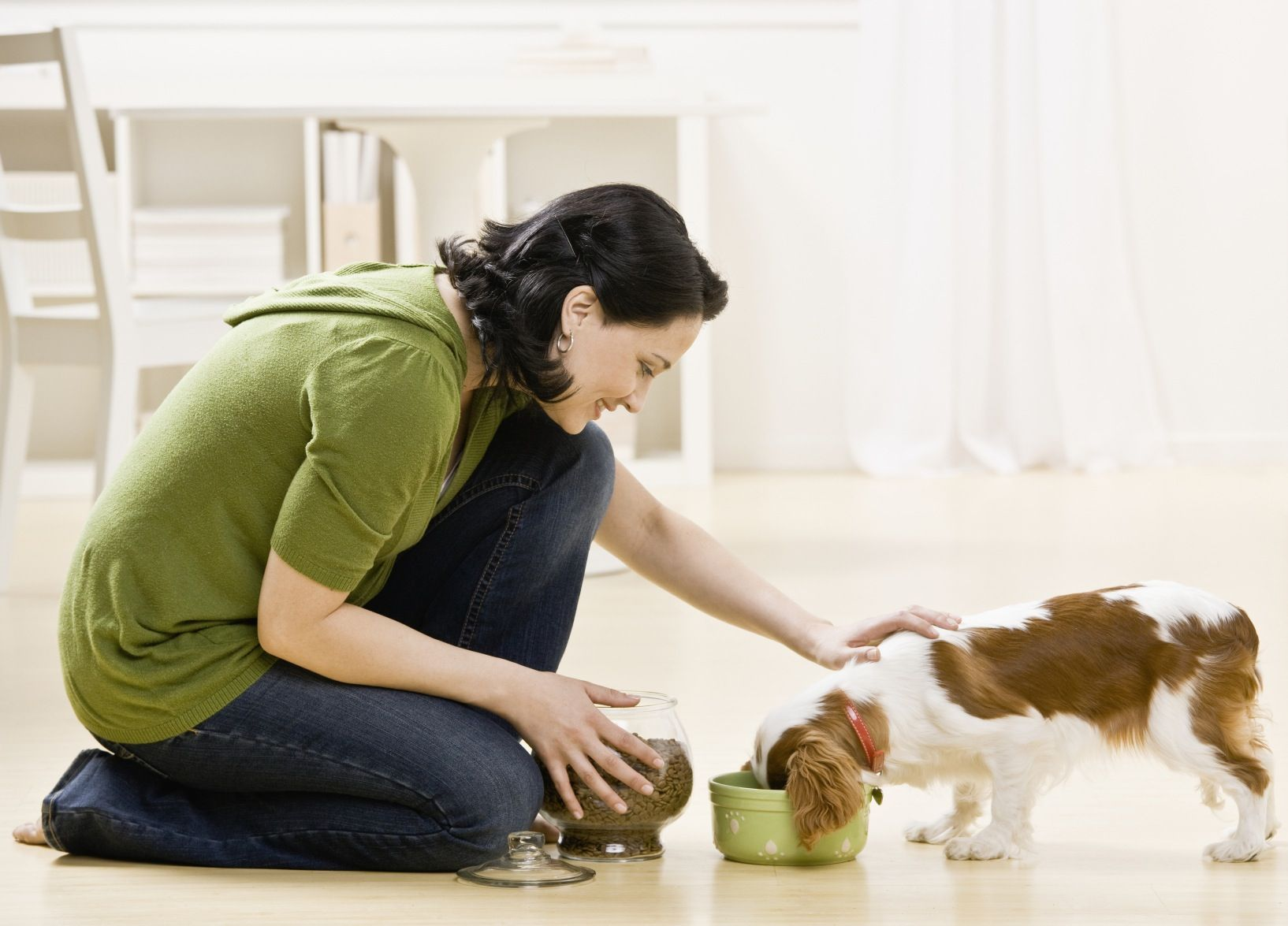 Pet Food Essential Guide The Truth Behind Prepared Dog