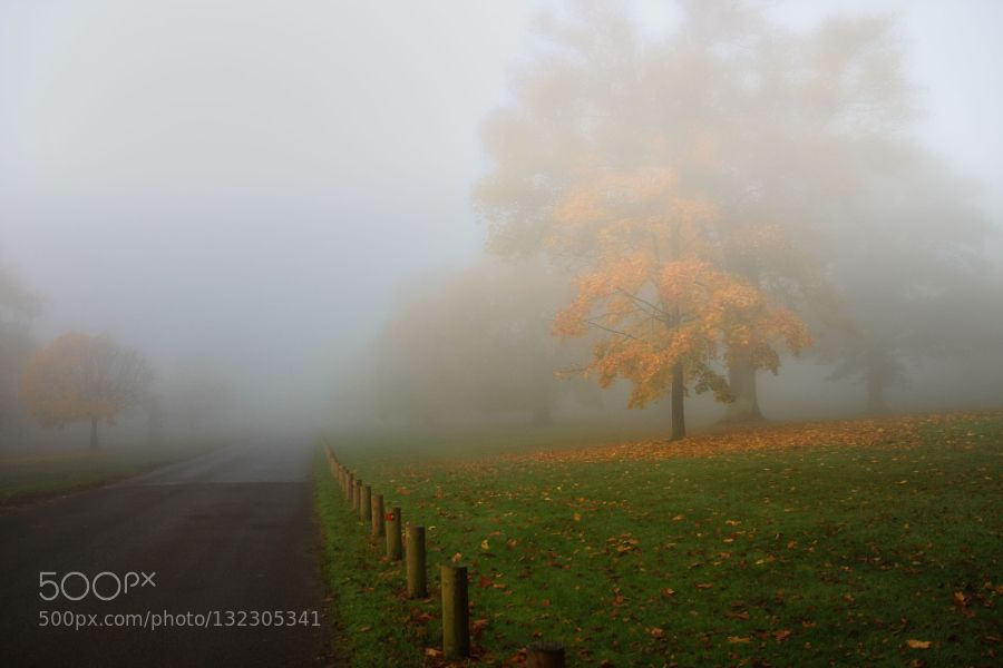 Through The Mist by HildaMurray #nature