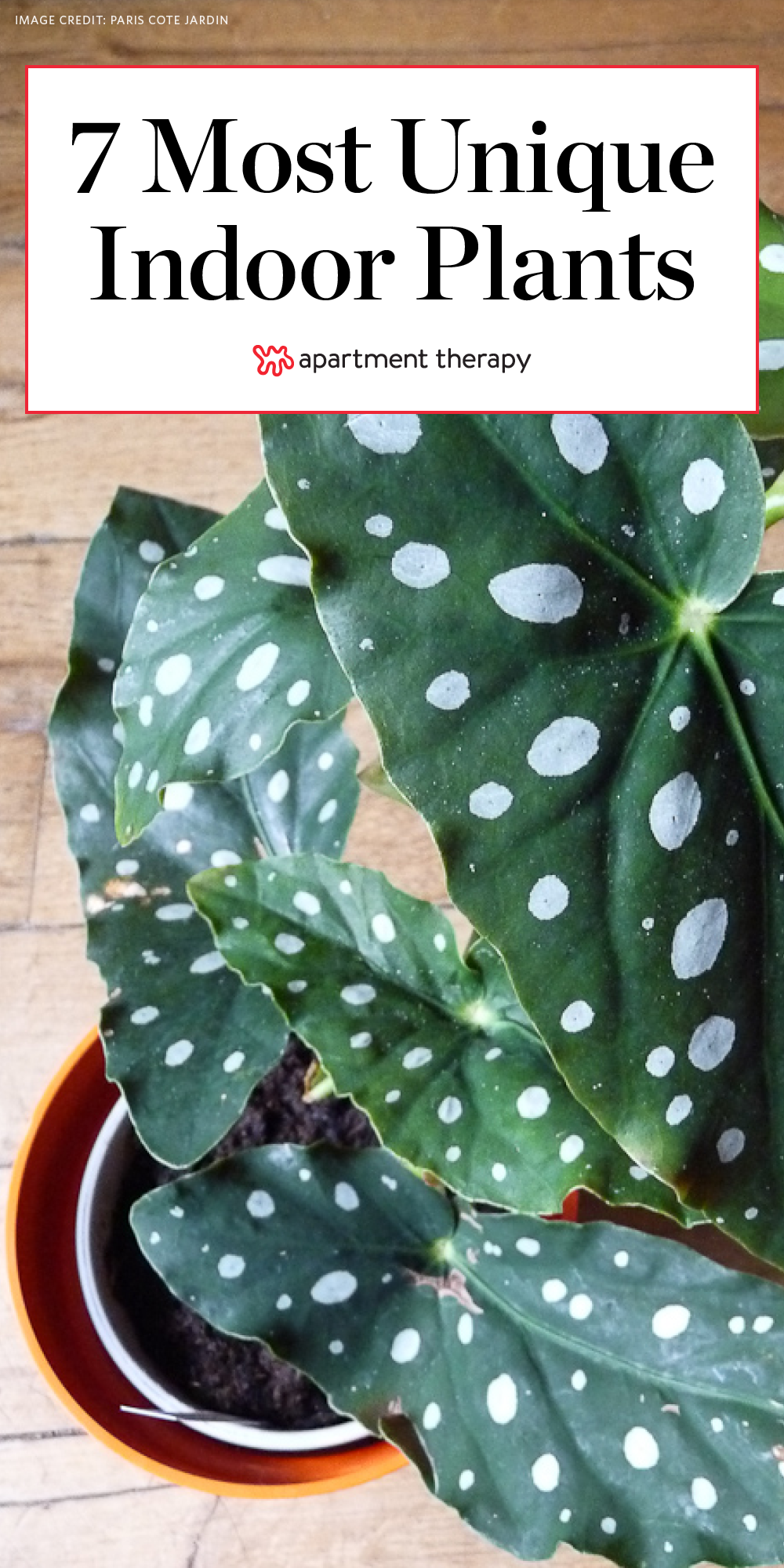 7 Houseplants With The Most Unique Leaves We Ve Ever Seen House Plants Indoor Inside Plants Plants