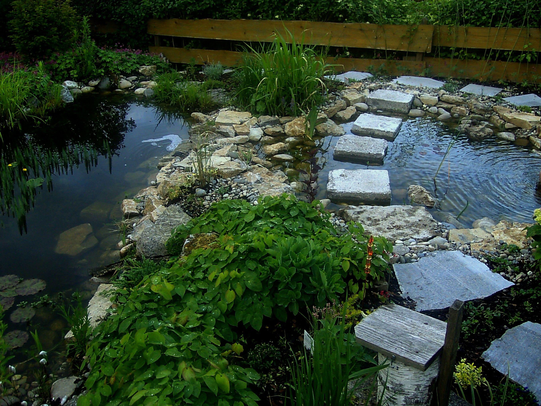 Blick auf beide Teiche. #Gartenteich #Teich #unsertraumingruen
