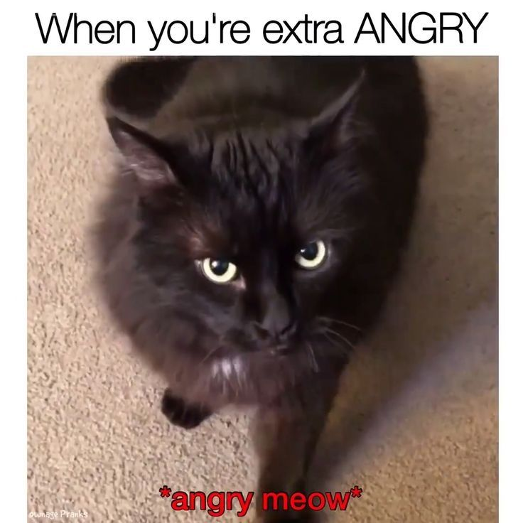 When you're extra angry 😂😂 The post Wait for it. 🤣 appeared first on Animal Memes.