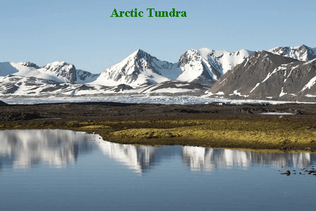 arctic tundra essay On land in greenland: a photo essay  studies suggest that large swaths of the  arctic tundra will be warm enough to support lush vegetation.