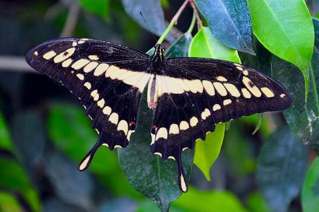 через объектив: Красивые фотографии бабочек   Бабочки ...