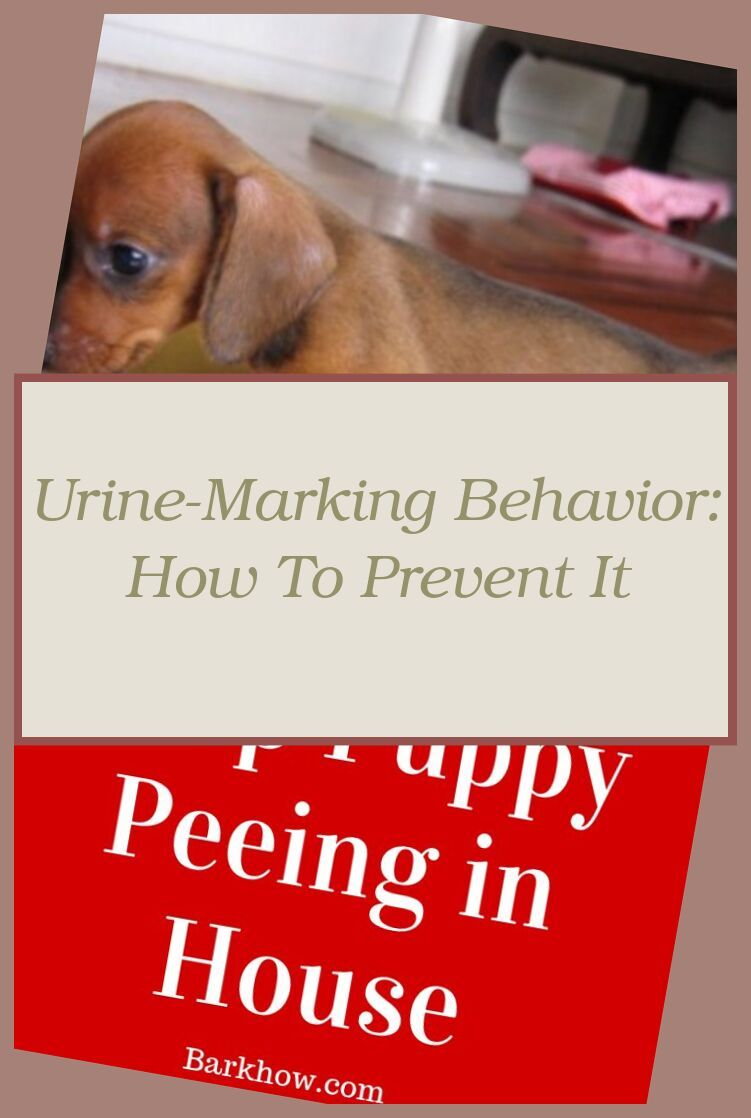 How To Potty Train A Boxer Pup With The Potty Training Puppy