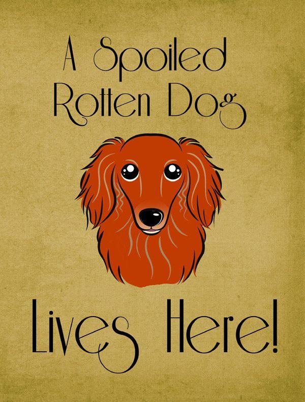 Longhair Dachshund Spoiled Dog Lives Here 2-Sided Garden Flag