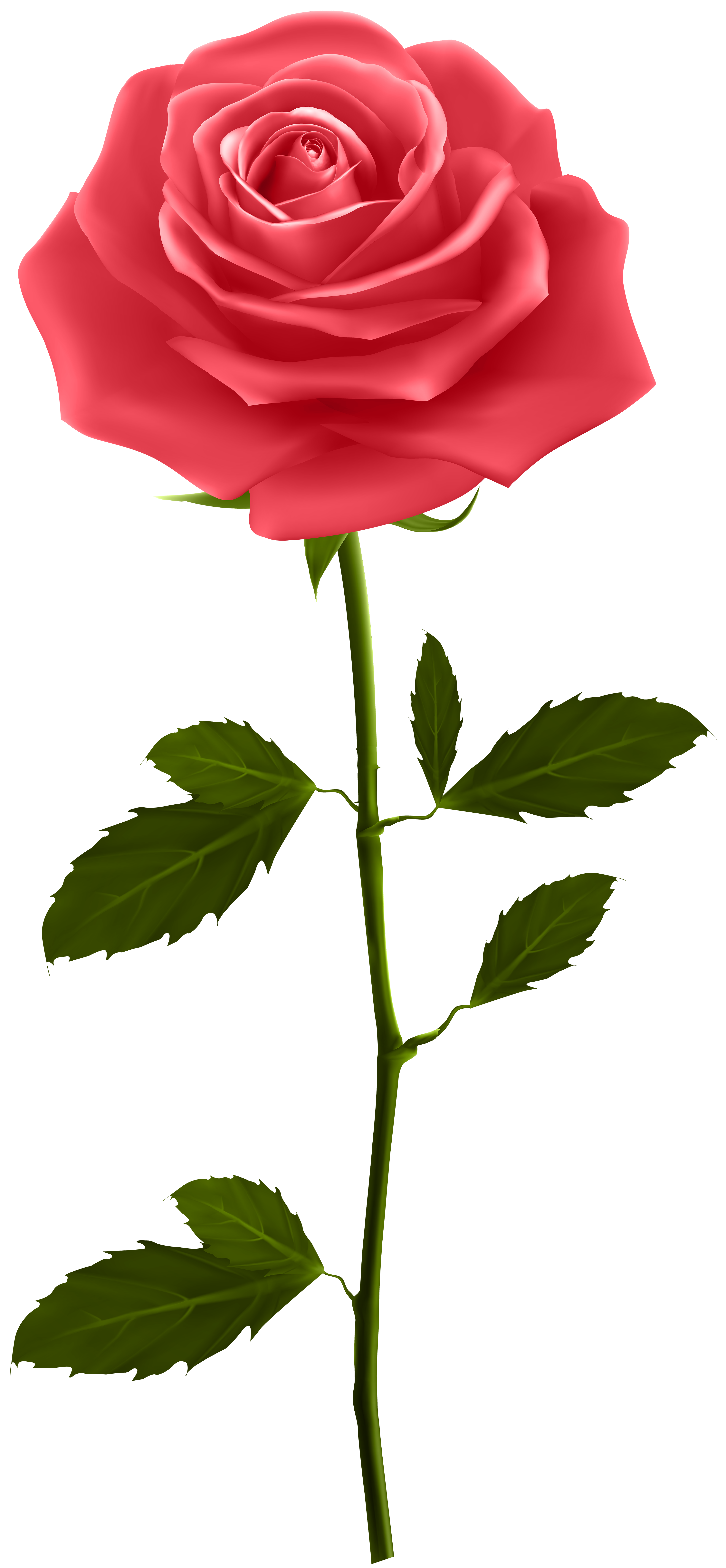 Red Rose with Stem PNG Clip Art | Gallery Yopriceville - High ... for Transparent Png Images Roses  29jwn