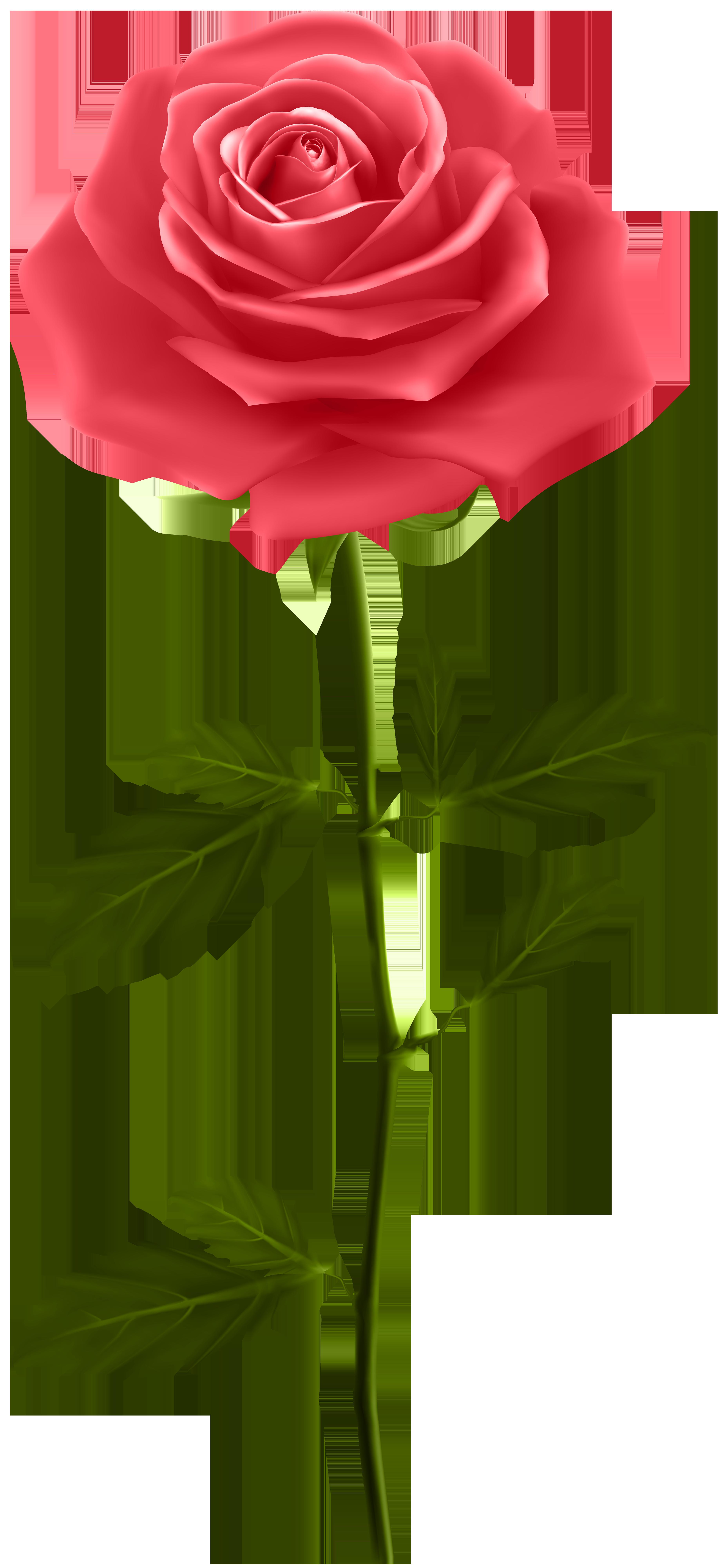 red rose with stem png clip art gallery yopriceville high rh pinterest com Flower Stem Drawing Flower Garden Clip Art