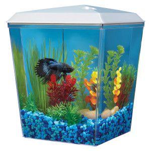 Top fin bettascene 1 aquarium petsmart starting with for Petsmart fish aquariums