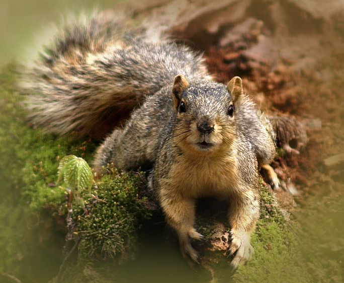 Cant you see Im busy? | Cute animals, Animals, Squirrel