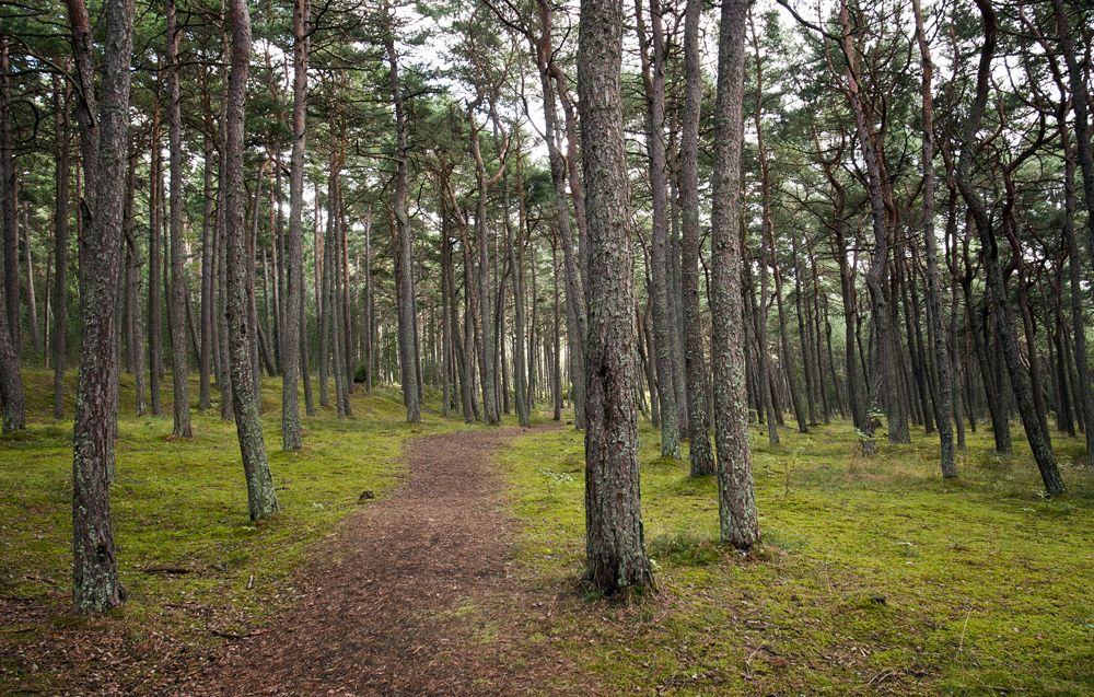 path in the forest | Flickr - Photo Sharing!