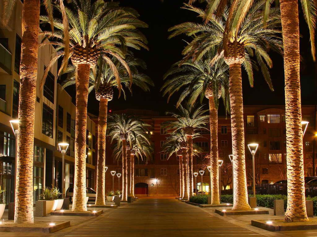 Canary Island Date Palm Natural | Christmas & Outdoor Lights ...