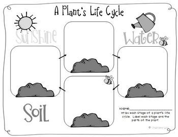 life cycle of plants 20 activities labs printables foldable flower book. Black Bedroom Furniture Sets. Home Design Ideas