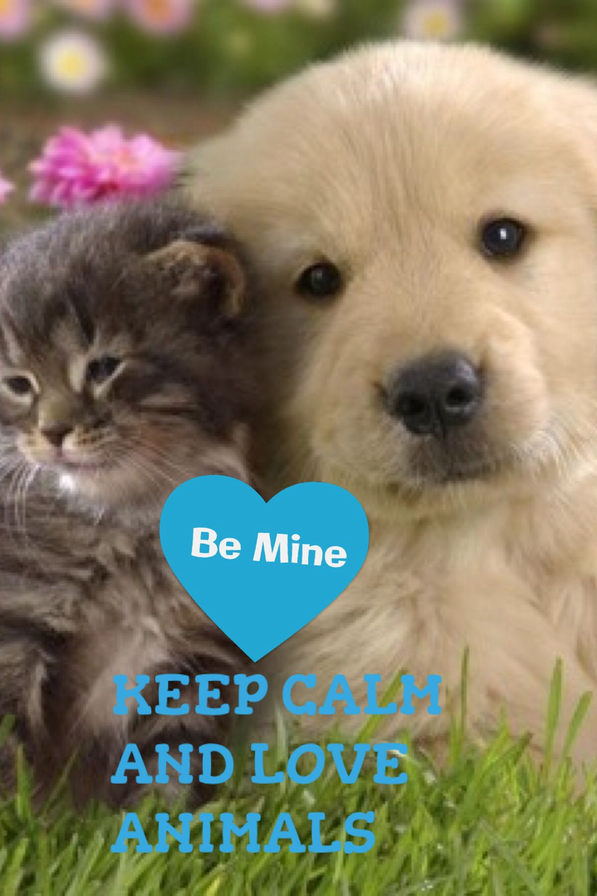I love animals Cute cats and dogs, Kittens and puppies