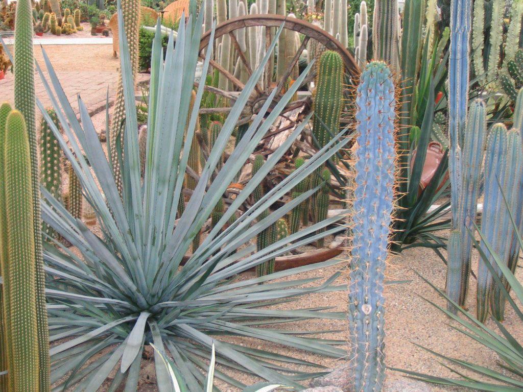 Cactustuin Ruurlo